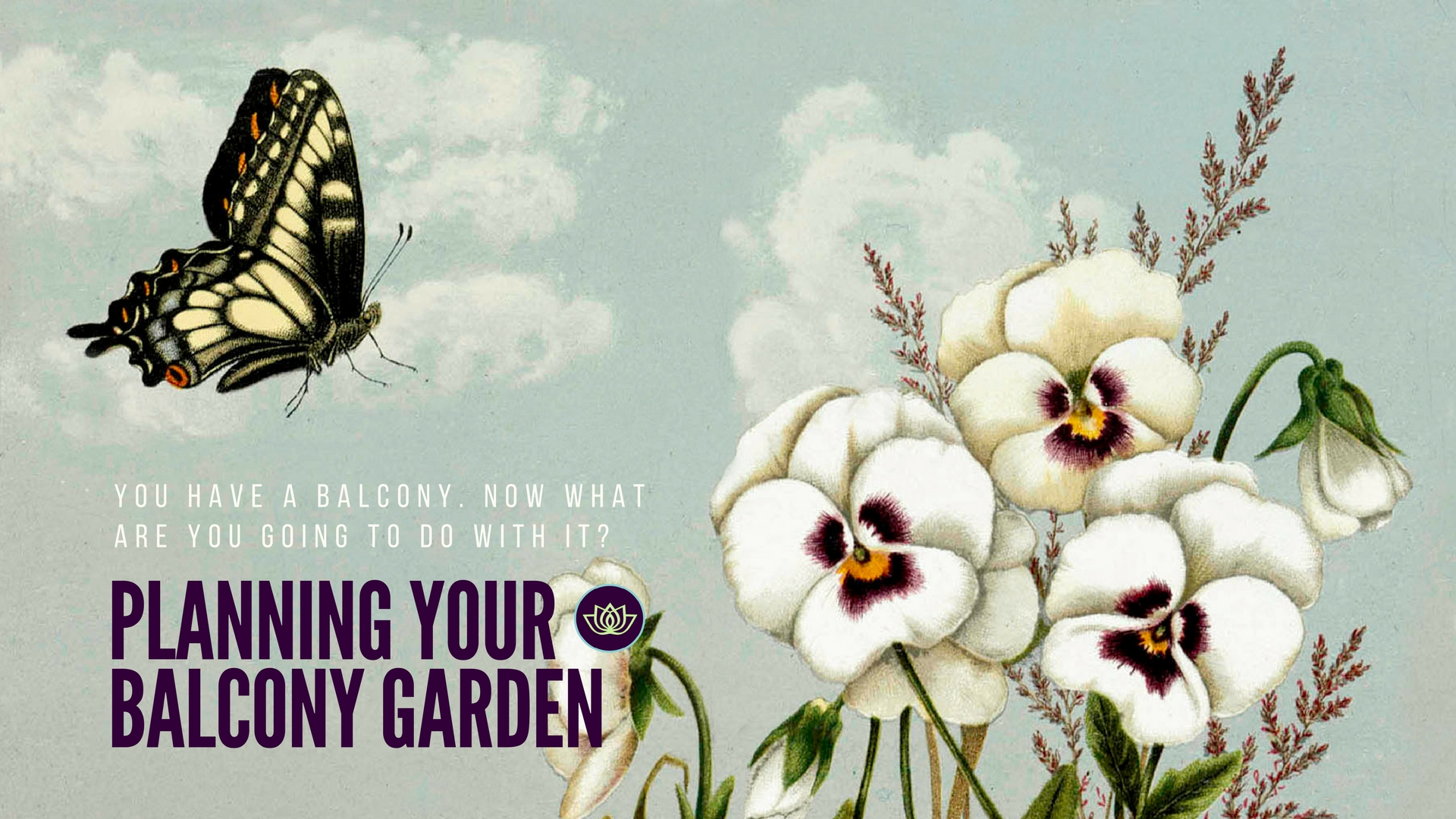 Pansies Butterfly - Planning Your Balcony Garden