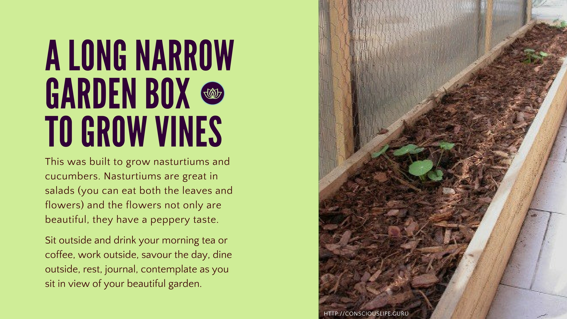Narrow wooden planter box for vines built by Amy Adams
