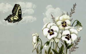 Beautiful Public Domain image of pansies and butterfly