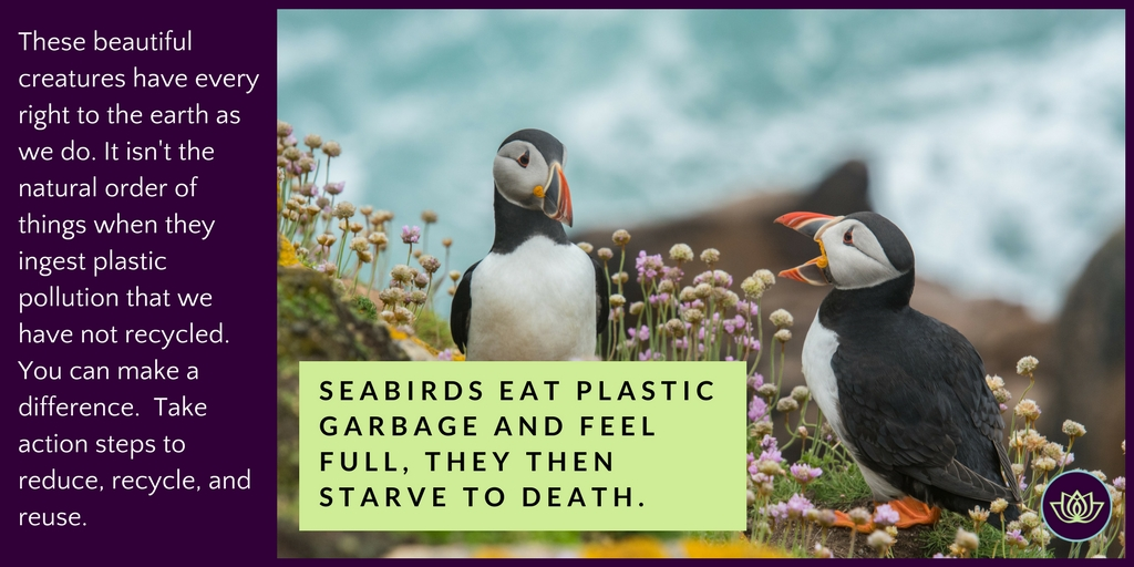 awareness campaign be the change - seabirds are dying from plastic pollution