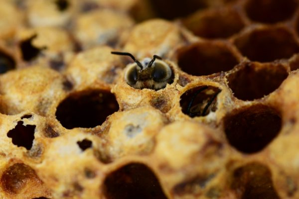 Bee in a honey comb