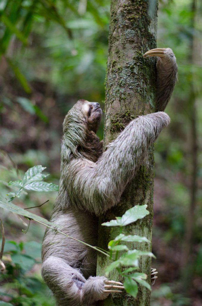 Procrastination - sloth - Conscious Life Space Guru