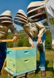 Displaced Coal Miners Turn to Beekeeping