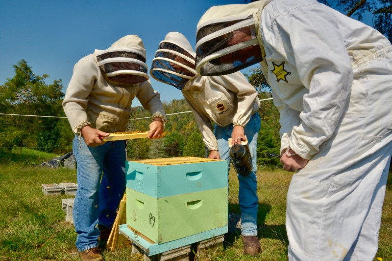 Appalachians learn beekeeping skills. Source: John Farrell
