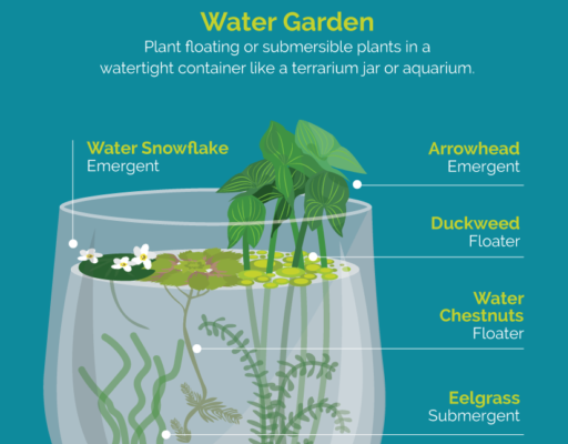 Water Garden Infographic - fix.com