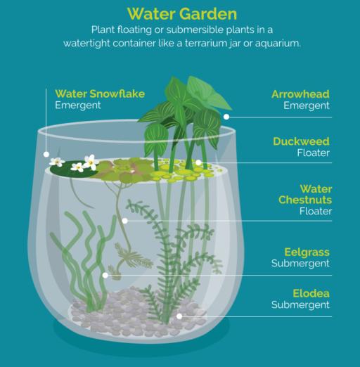 Indoor Gardening, an Infographic