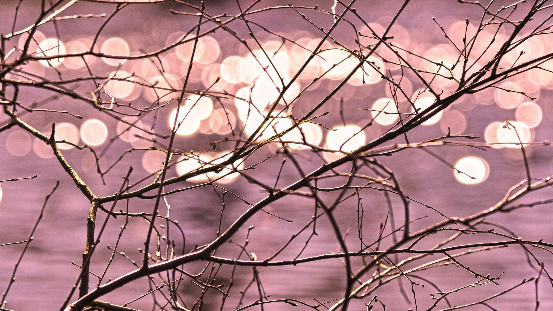 Focus image, branch Photo Credit: Mabel Amber