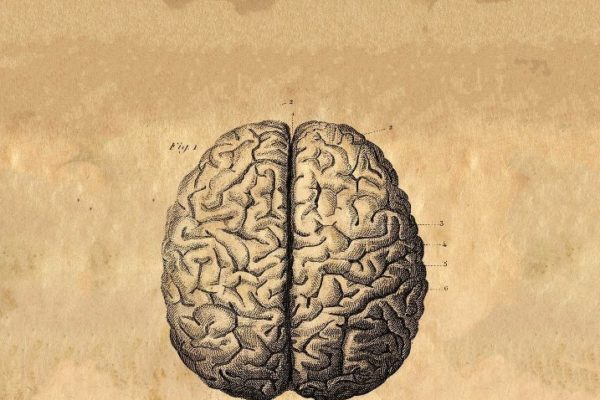 The Human Brain by Albrecht von Haller (c. 1776)