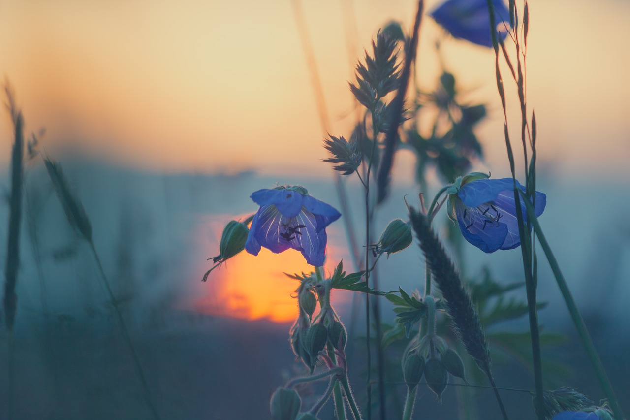 Plants in a meadow photo by Jonathan Sautter - Conscious Life Space [Guru]