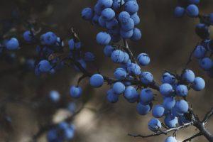 fruit by Roksolana Zasiadko