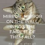 Reflections in the mirror and how see ourselves vs True Mirrors on Conscious Life Space