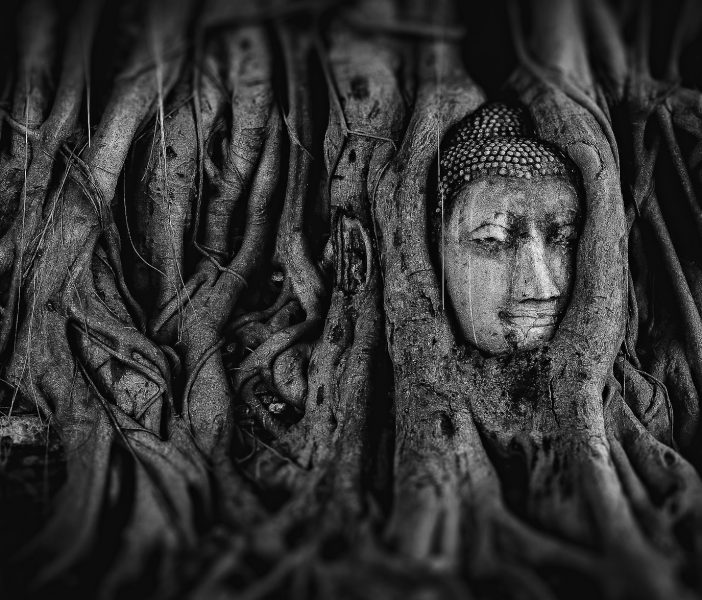Buddha – Tree