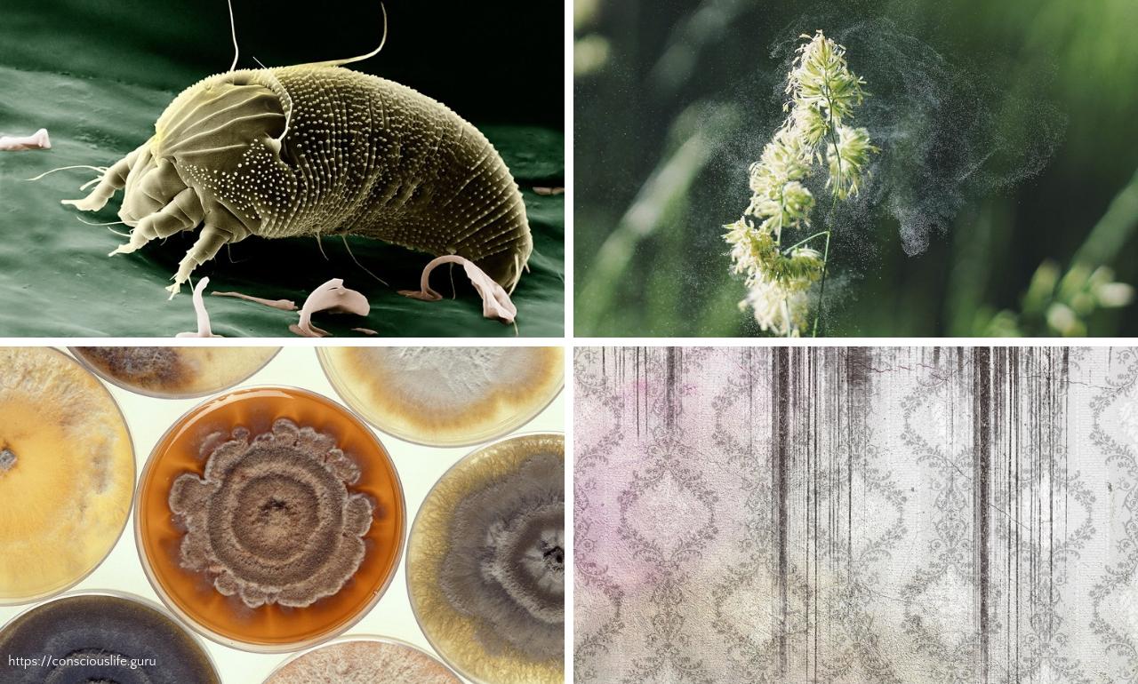 indoor pollution mites pollen mold mildew
