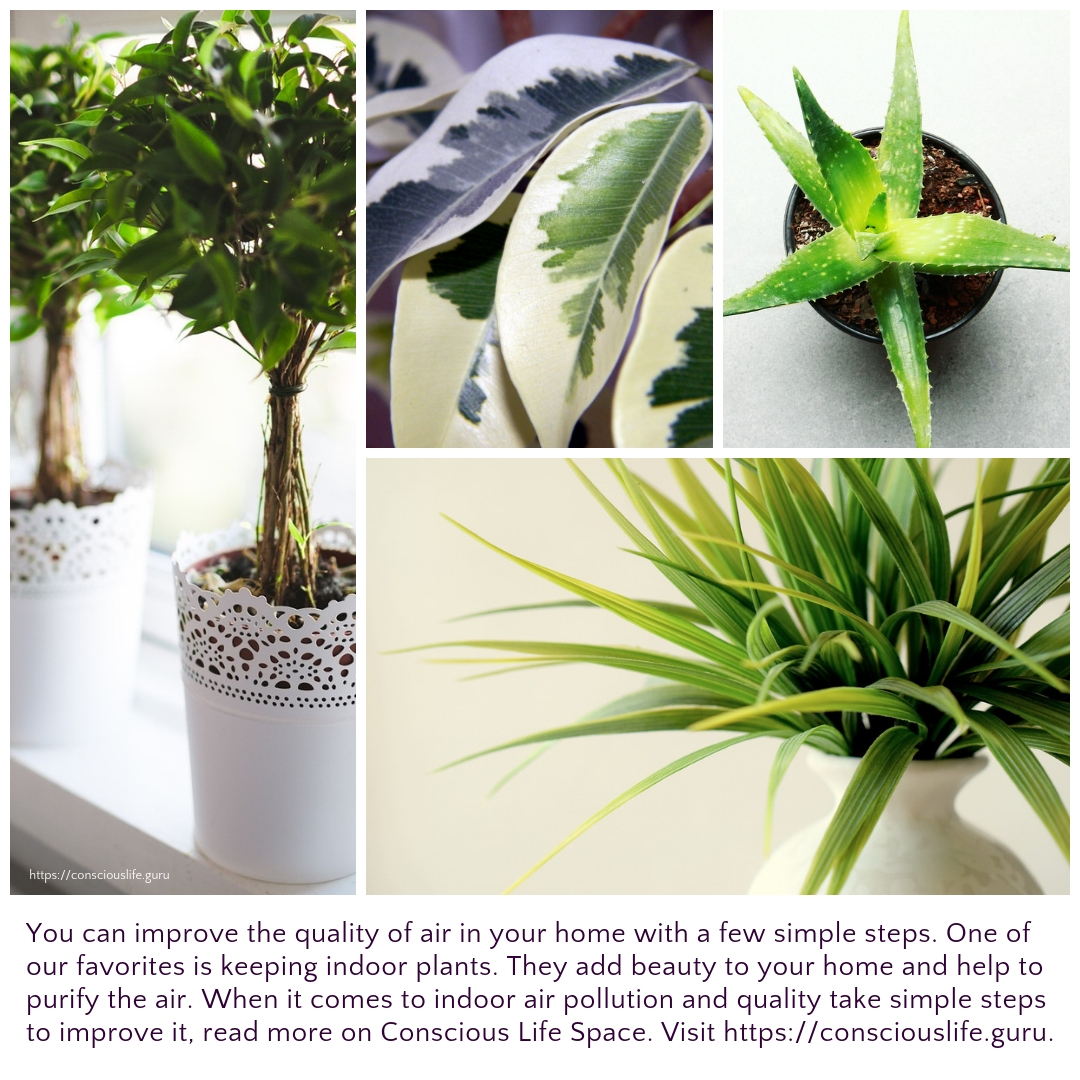control indoor pollution with houseplants