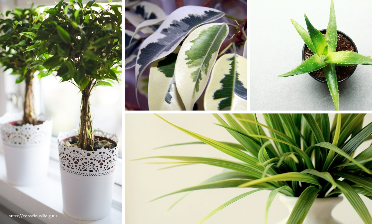 A variety of houseplants improve the quality of air in your home