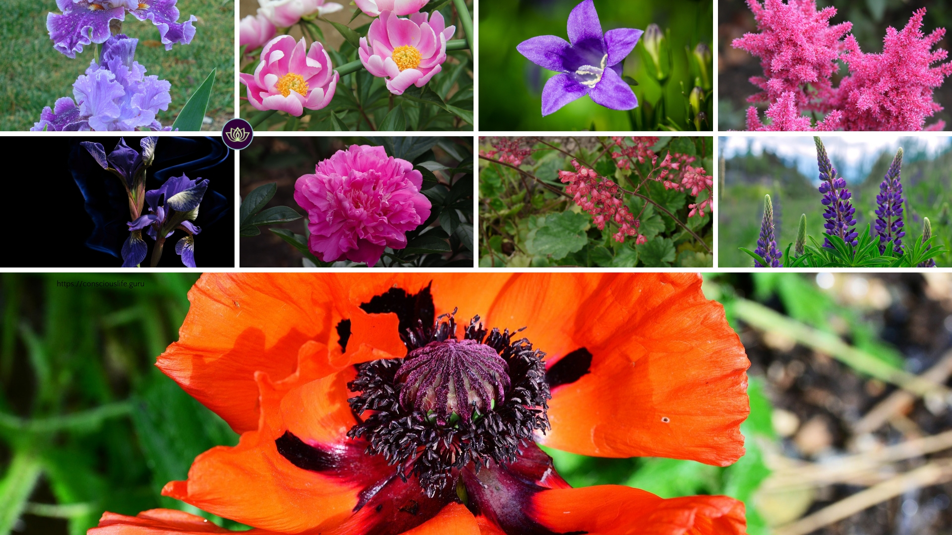 We made a perennial plant guide to mid-spring to late spring blooms for your garden