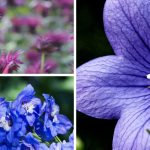 Early to Mid-Summer Perennial Bloom Succession